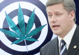 Stephen Harper and the Conservative Party of Canada want to put marijuana users, growers and sellers behind bars. Bill C-15 will bring American-style mandatory minimum sentences to Canada.