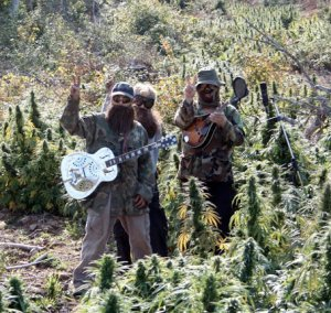Members of the Indus Guys, a marijuana-activist rock band, stand in disguise among cannabis plants growing in a Nova Scotia forestry clear cut.