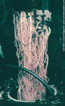 Healthy roots make happy plants and rapid growth.