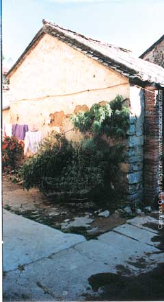 Eight feet of male cannabis growing outside a home in Dali.