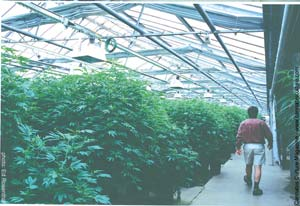 Strolling through the 1000 square meter greenhouse.