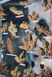 A trophy case of awesome nugs.