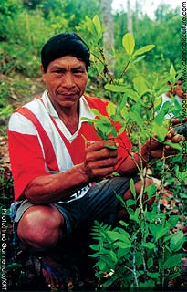Local farmer poses proudly with his coca crop.