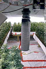 & The ultimate grow room | Cannabis Culture