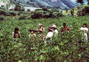 Traditional farming in Bolivia