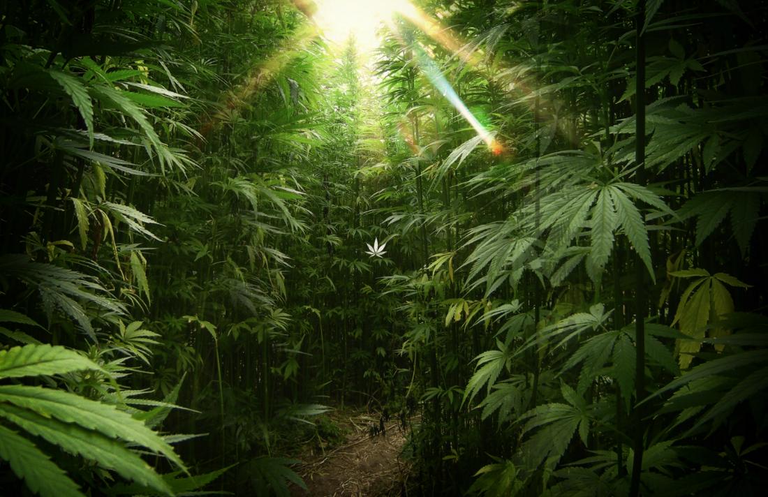 Cannabis Wallpaper 6