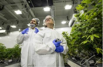 potresearch 1647jpg 5e2d9695d39576e3 350x227 - Can Massachusetts Become a Leader in Marijuana Research?