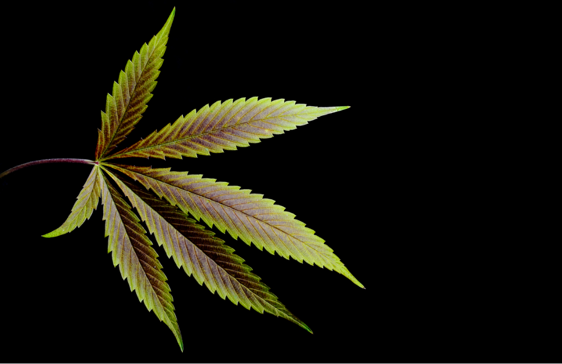 Cannabis: Secret to a Fulfilling Retirement, Pot Entrepreneurs Say