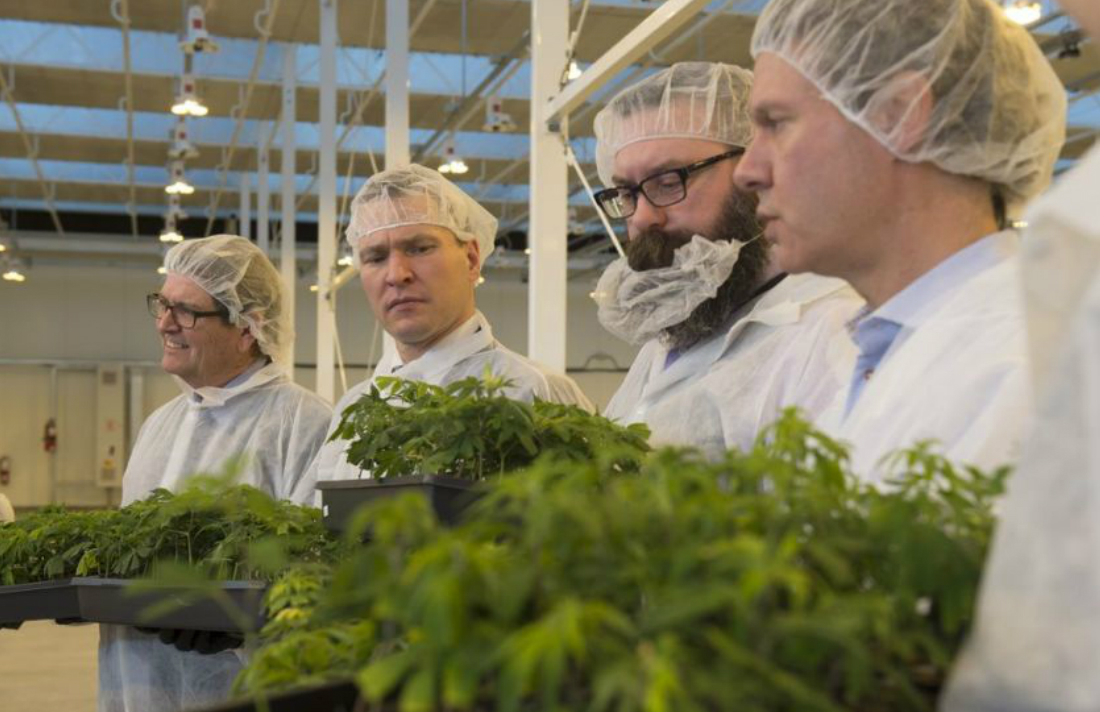 Aurora Cannabis Gets Licences for Two Outdoor Growing Facilities thumbnail