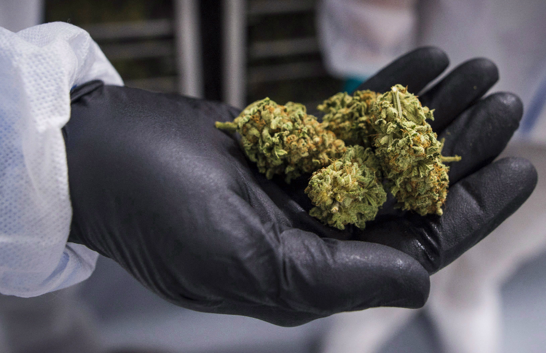 Cannabis Canada: Health Canada Suspends Second Pot Firm From Growing, Selling Legal Cannabis thumbnail