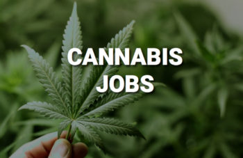 Thinking About a Career in Cannabis? Resilience, Creativity and Passion Are Prerequisites 2