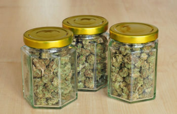 photo of Why U.S. Cannabis Researchers Have Had to Resort to Importing Pot From Canada and the Netherlands image