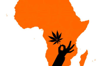 Large Medical Cannabis Patient Study in Europe Picks African Company as Supplier 2