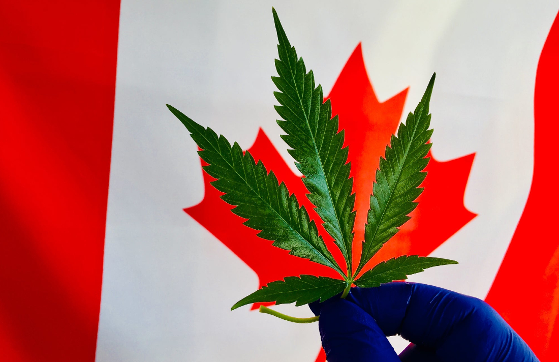234567yutrcanada - 2 Cannabis Stocks That Should Survive the COVID-19 Crisis