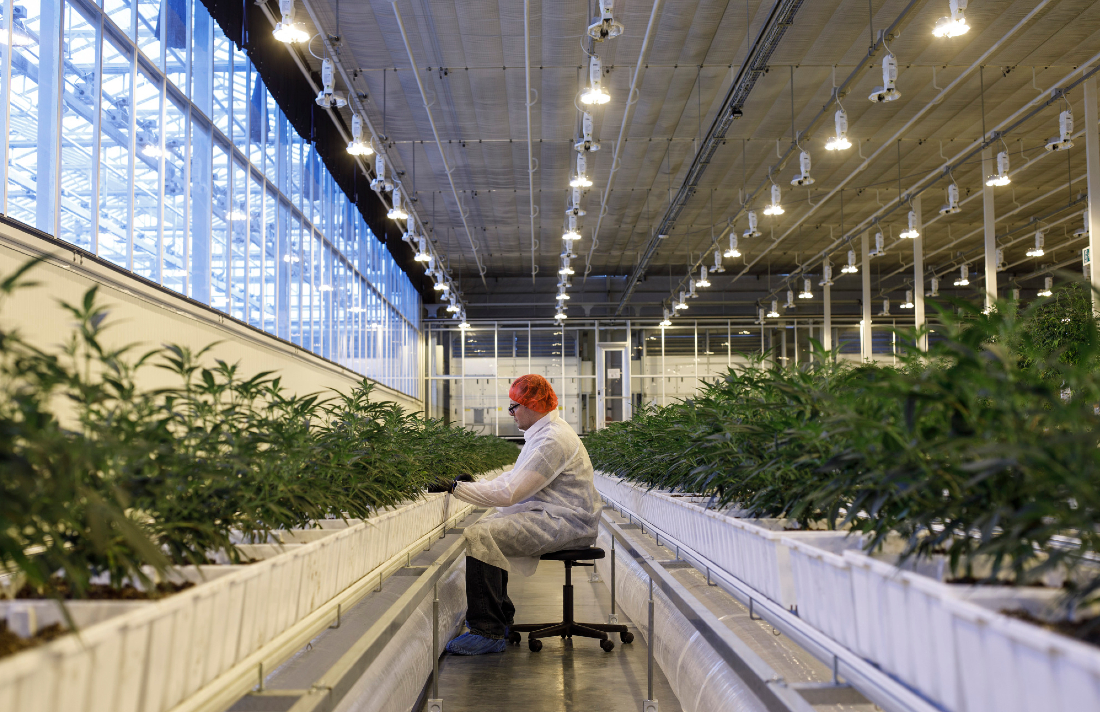 345432rfrfrfvcassadas - Aurora Cannabis is Laying Off Huge Swath of Workforce and Shutting Five Facilities