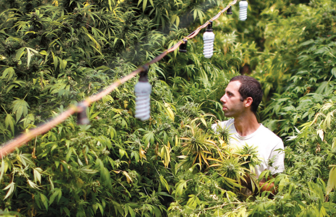 23456isgeisge567765 - Israel Overtakes Germany as Largest Importer of Medicinal Cannabis Flower
