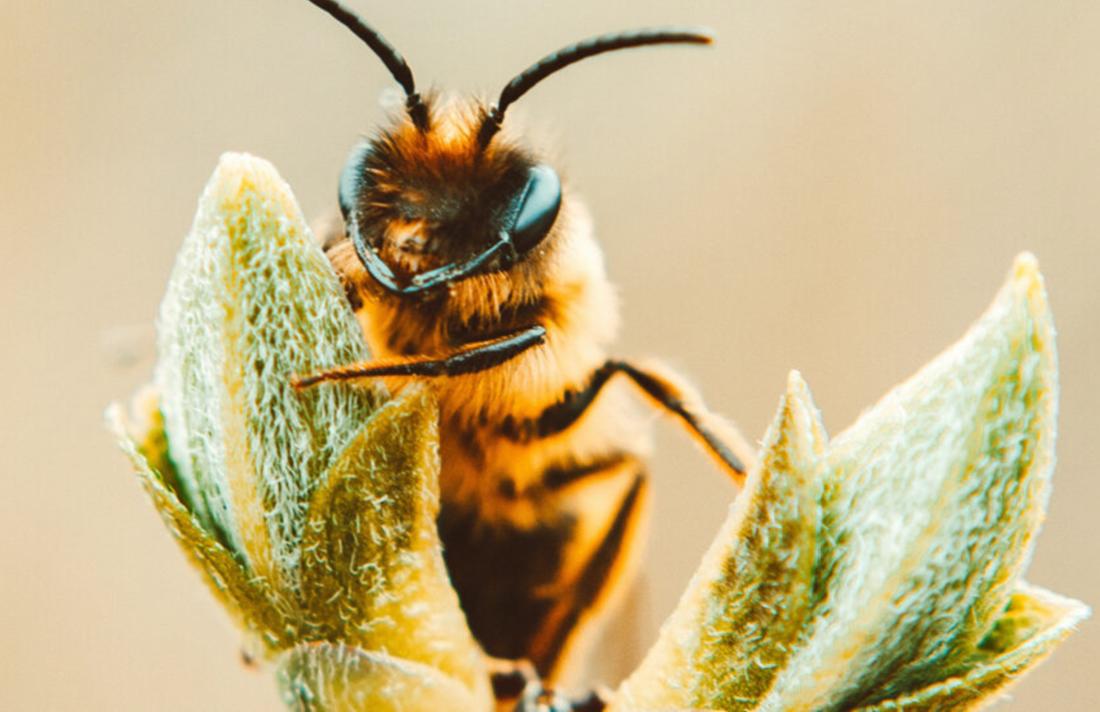 bees34567890poi8u7y6trertyu - Can Cannabis Help Save The Bees?