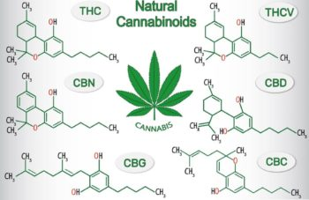 photo of What Is CBG—And Is It Different Than CBD? Experts Weigh In image