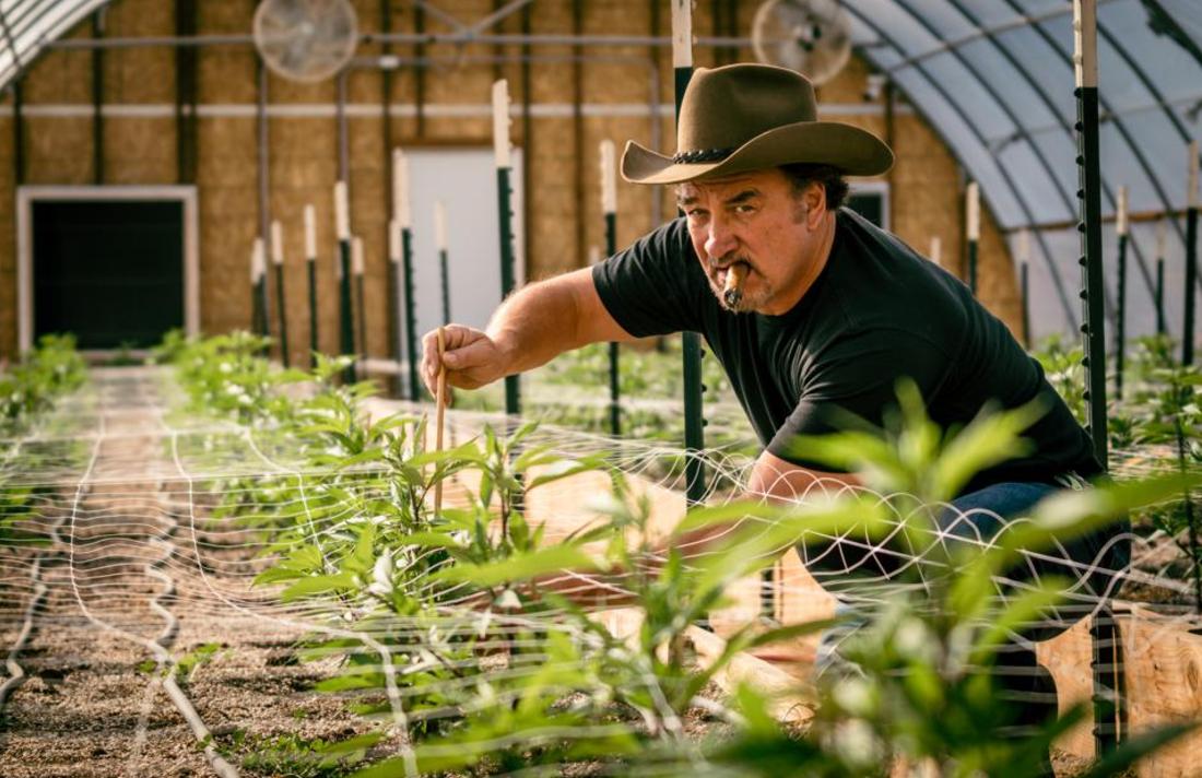 b3454534u345345s5345h434iaaaa 1 - Jim Belushi's Path From Cannabis Farming To Reality TV