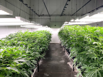 SYNDICATE1 350x263 - The Syndicate: Podcast Exposes Biggest Black Market Pot Bust in US History