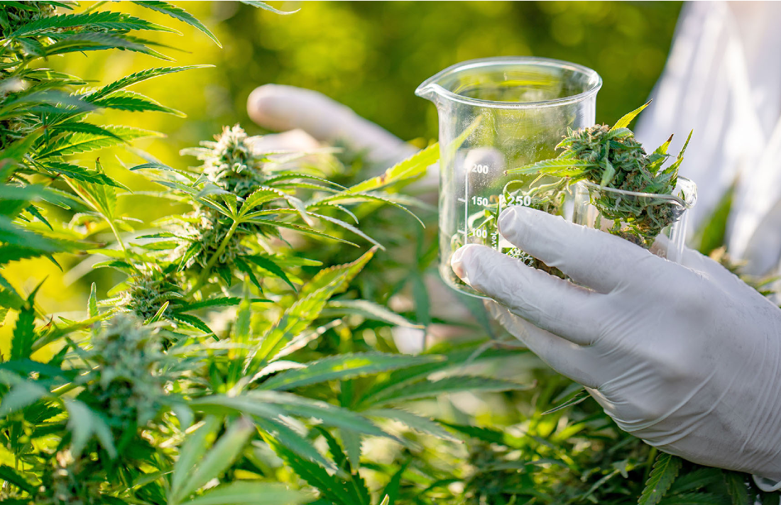 medical maryjane - Parkinson's Patients Report Using Cannabis Largely for Symptom Relief in U.S. Survey