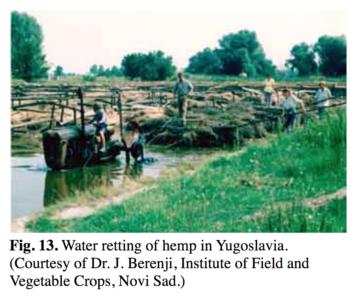 0 2 350x304 - What Bill Weinberg Misunderstands About Hemp Ethanol