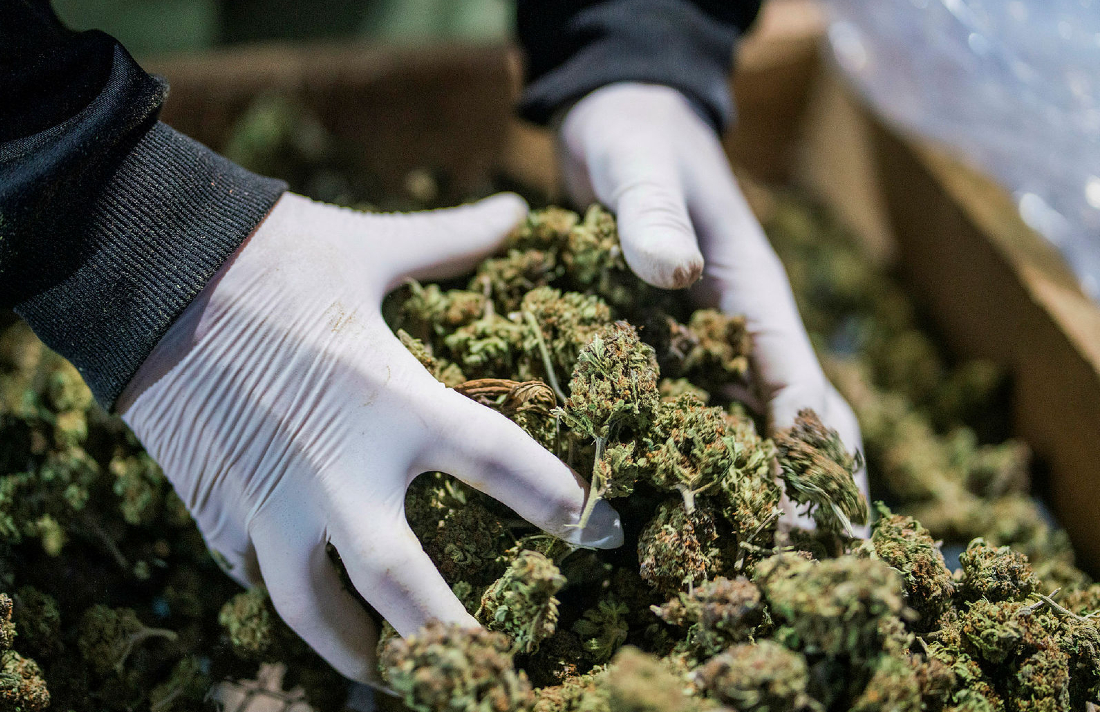 16018441335041 b - New Zealand Votes Against Legalizing Cannabis, Preliminary Results Show