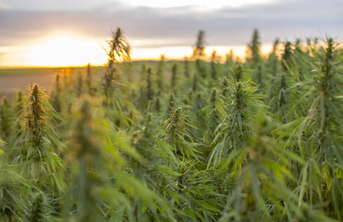 5edf2d7b59571 o original - Hemp Opportunity Zones: A New Opportunity for Real Estate Investors