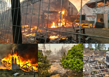 WildfireDamagePIX 350x250 - Cannabis Cultivators Suffer Devastation as Wildfires Rage in the West