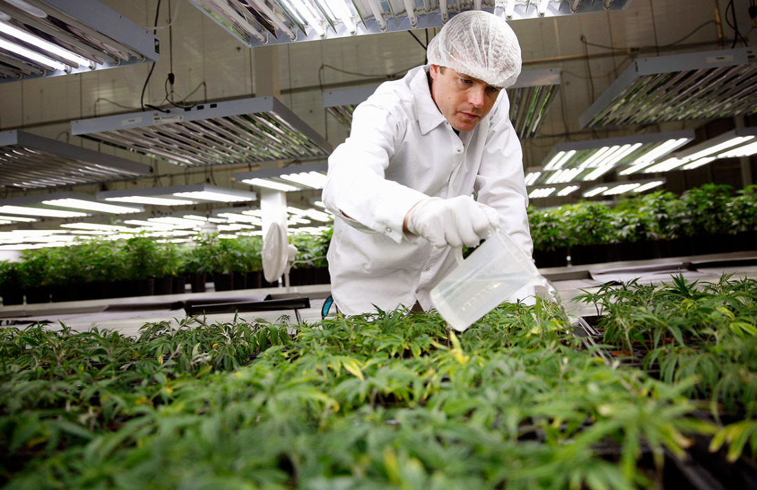 cannabisjobs - 250,000 Americans Work In Legal Cannabis And Jobs Are 'Growing'