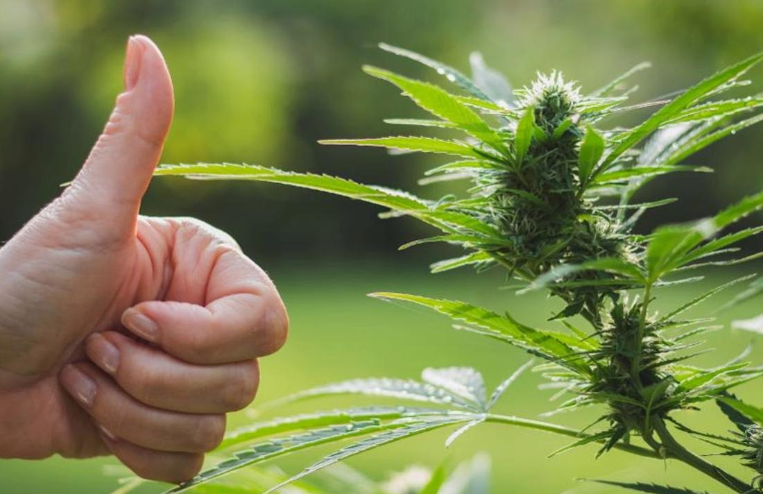 france34545646756878 - France Gives Final Go-Ahead For Medical Cannabis Testing Program