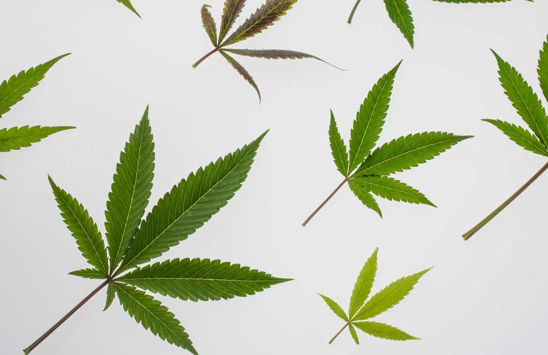 marijuana leaf 1296x728 header - 7 Things I Learned Using Medical Cannabis for Multiple Sclerosis