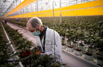 , Canadian Cannabis Stocks Pop On U.S. Legalization Push And Gamestop-Style Short Squeeze