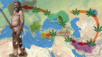 , The Proto-Indo Europeans and Indo-European Cannabis Cult