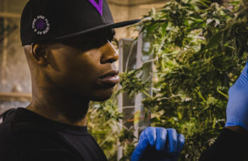 , The First Black-Owned Multinational Cannabis Brand: Al Harrington's Viola To Launch In Canada
