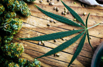 , CBD, Cannabis And Hemp: What Is The Difference Among These Products?