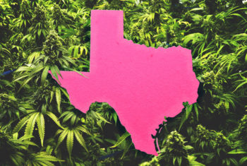 , How Texans Fight for Medical Cannabis Access