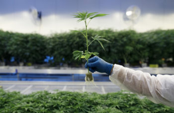photo of Cannabis Is Medicine. Just Ask The Parents Of Children With Seizures image